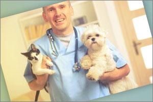 Teléfono veterinarios Madrid