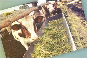 Teléfono Gratuito Consejería de Agricultura de Andalucía